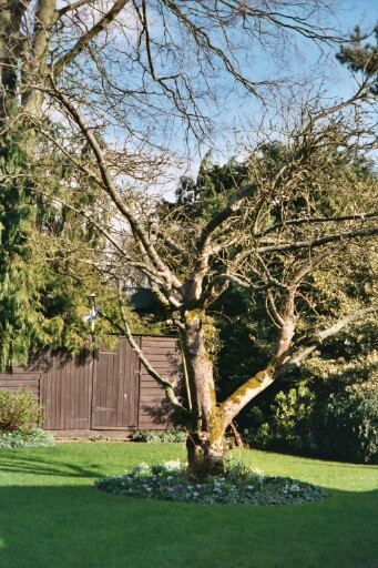 tree in the sunshine in Auntie Averill and Dennis' yard